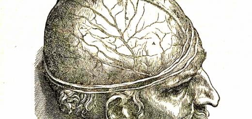 Image of an engraving from Vesalius, De humani corporis fabrica.